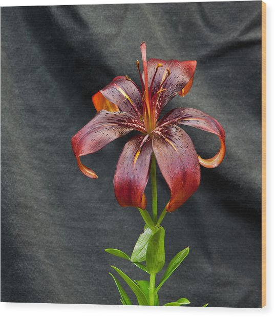 One Black Lily Wood Print