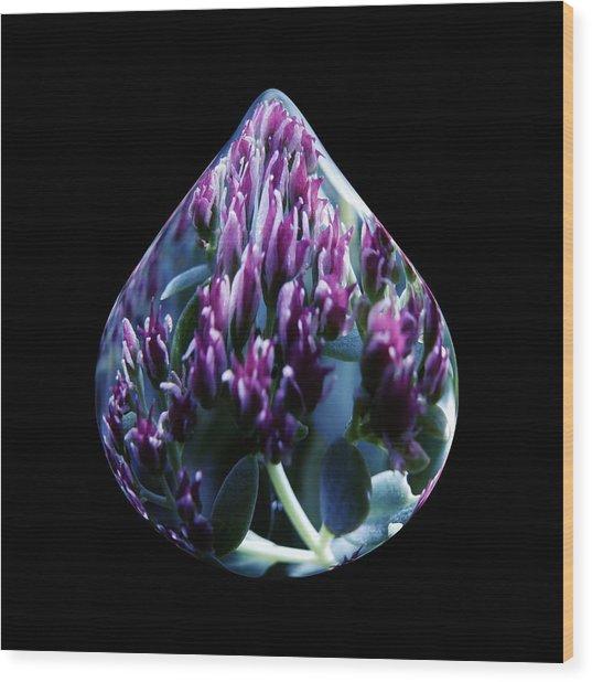 One Drop Of Water Wood Print