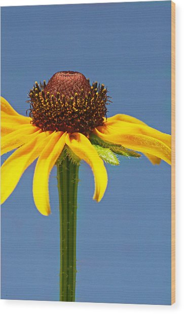 One Lone Flower Wood Print by Michelle Armstrong