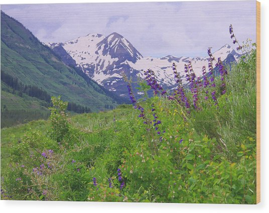 One-sided Penstemon Wood Print