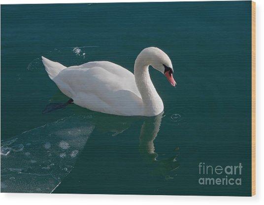 One Swan A-swimming Wood Print