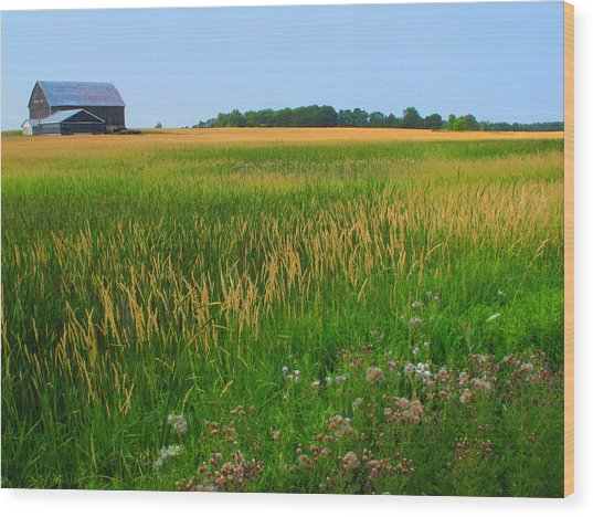 Ontario Farm  Wood Print by Lyle Crump