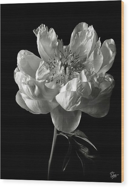 Open Peony In Black And White Wood Print