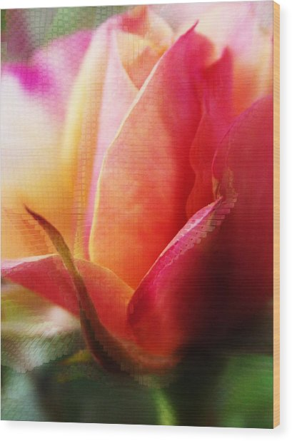 Orange And Pink Rose Abstract Wood Print by Robin Cox
