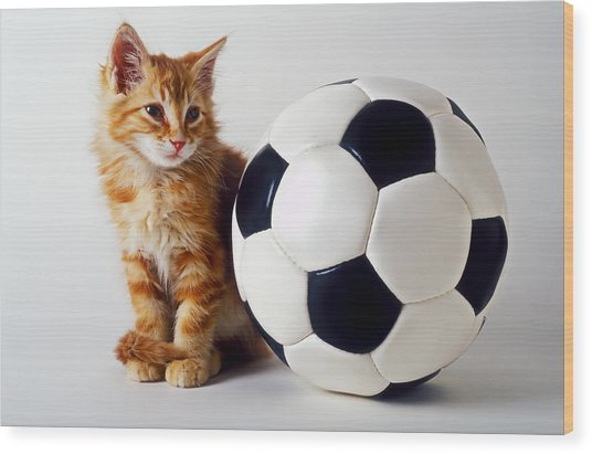 Orange And White Kitten With Soccor Ball Wood Print