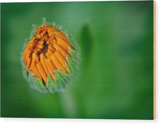 Orange Bloom Wood Print