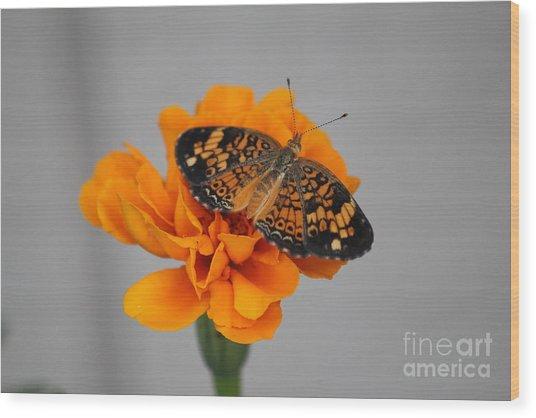 Orange Butterfly 1 Wood Print