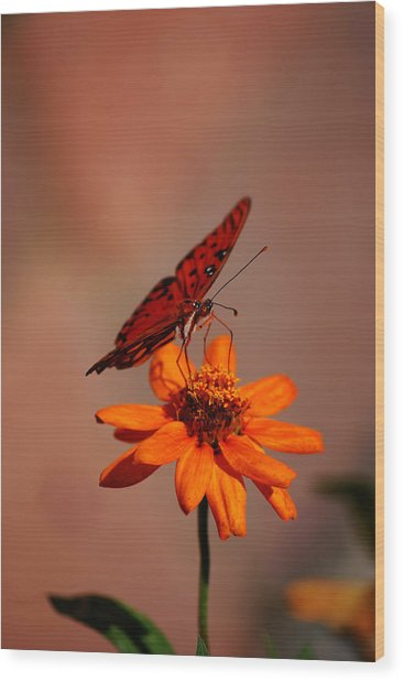 Orange Butterfly Orange Flower Wood Print