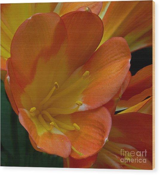 Orange Delight Wood Print