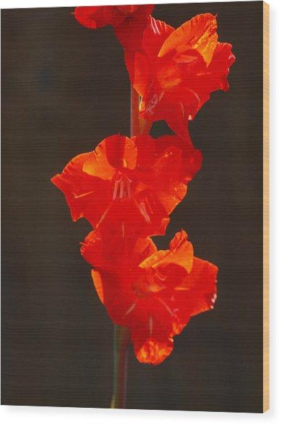 Orange Fire Wood Print by Jim Moore