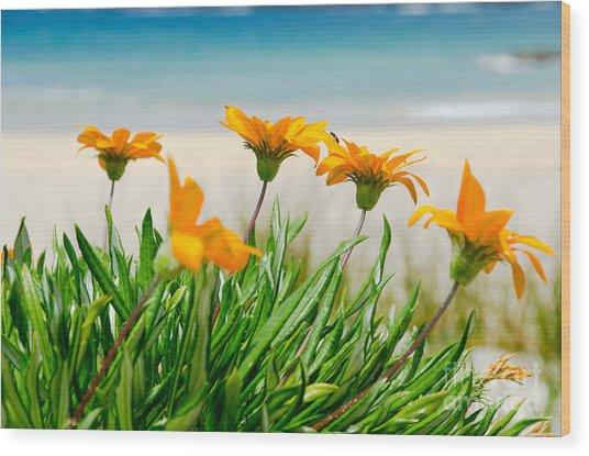 Orange Flowers On The Sunny Ocean Beach. Wood Print