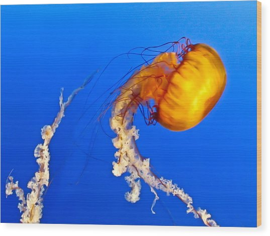 Orange Jellyfish Wood Print
