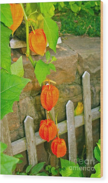 Orange Lanterns Wood Print
