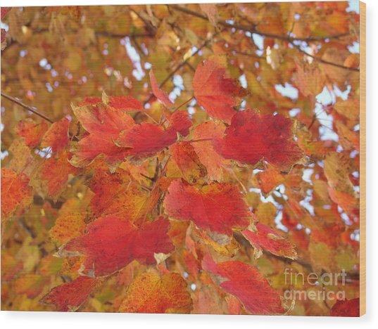Orange Leaves 4 Wood Print