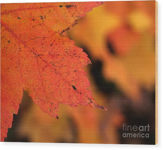 Orange Maple Leaf Wood Print by Chris Hill