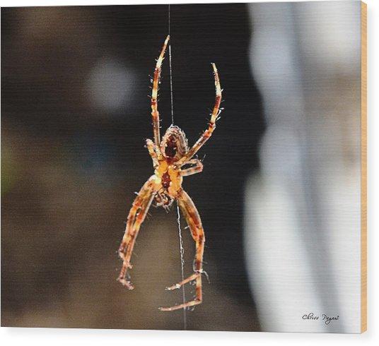 Orange Spider Wood Print