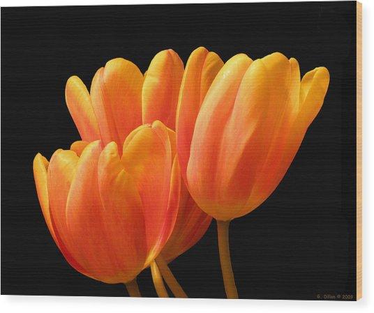 Orange Tulips On Black Wood Print
