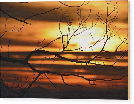 Orange Zest Wood Print