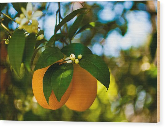 Oranges And Blossoms Wood Print