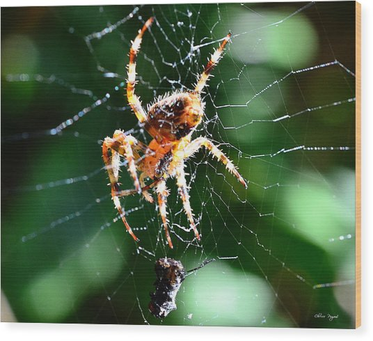 Orb Weaver And Lunch Wood Print