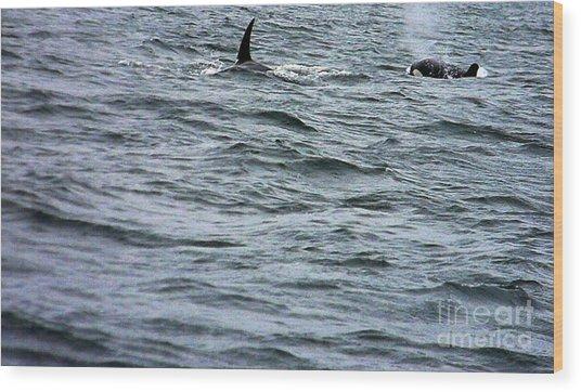 Orca Whales Wood Print by Derek Swift