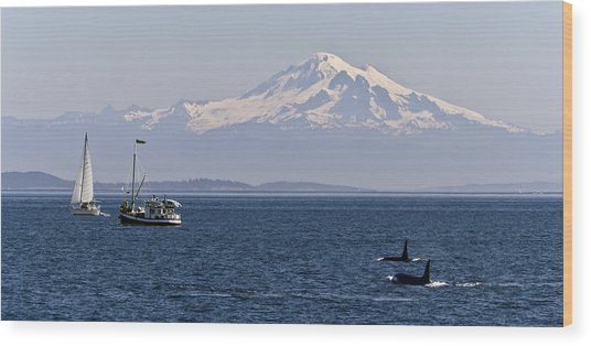Orca's And Mt Baker Wood Print