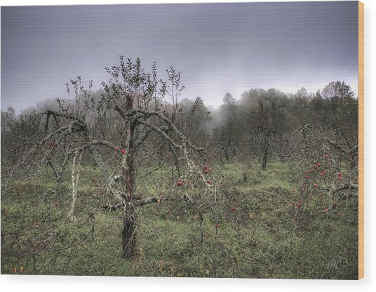Orchard At Altapass Wood Print by Williams-Cairns Photography LLC