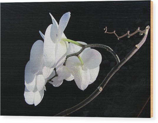 Orchid Above River Wood Print
