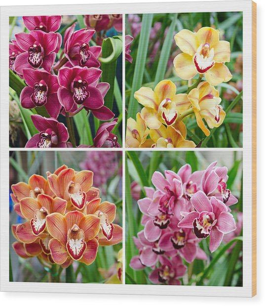 Orchid Collage Wood Print