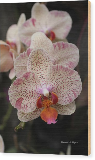 Orchid Perspective Wood Print