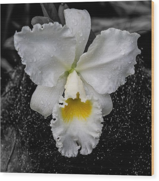 Orchid Shower Wood Print