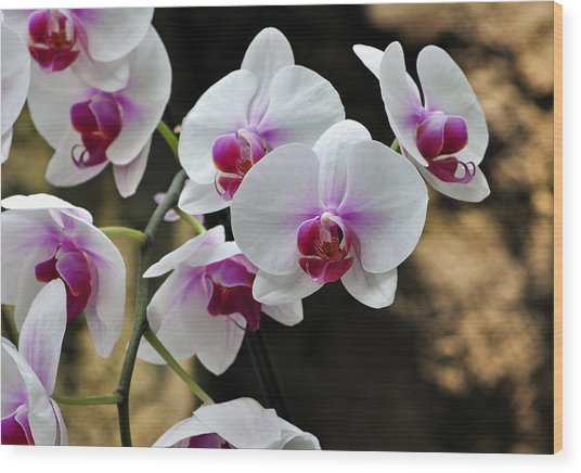 Orchids For Your Day Wood Print by Timothy Johnson