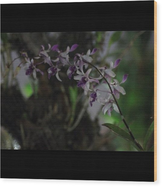 Orchids Of Beauty And Mystery, By My Wood Print