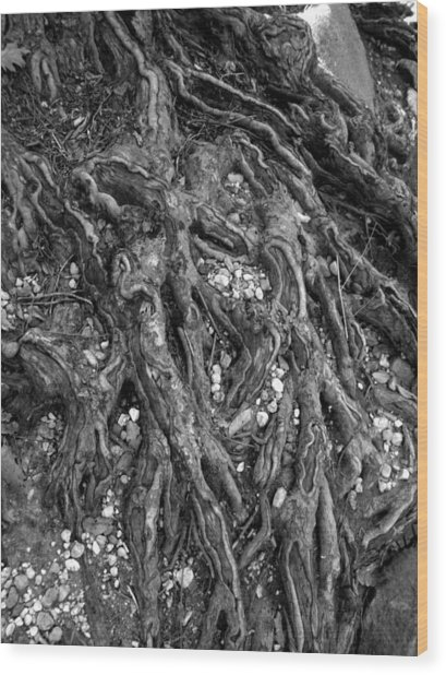 Organica Wood Print