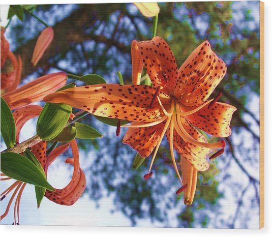 Oriental Lily 1 Photograph By Dave Dresser