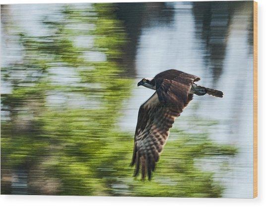 Osprey In Flight Wood Print by Frank Feliciano