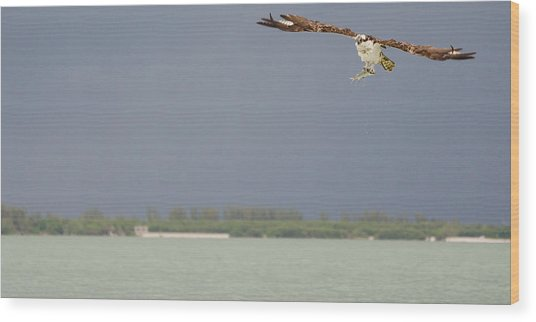 Osprey With Catch Wood Print by Mike Rivera