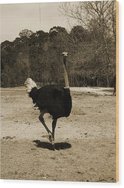 Ostrich Wood Print by Pamela Stanford