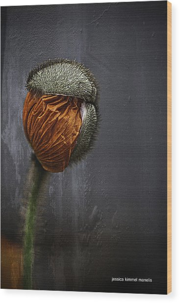 Out Of Darkness Grows Flowers Wood Print by Jessica Manelis