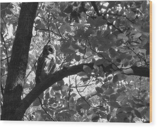 Owl N The Park Wood Print