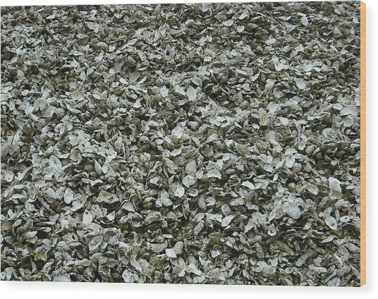Oyster Piles In Oysterville Wood Print