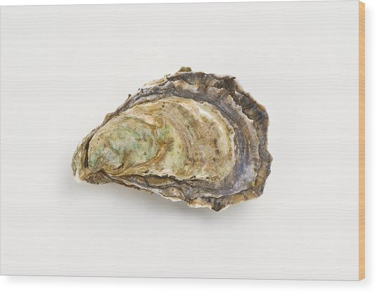 Pacific Oyster Wood Print by David Nunuk