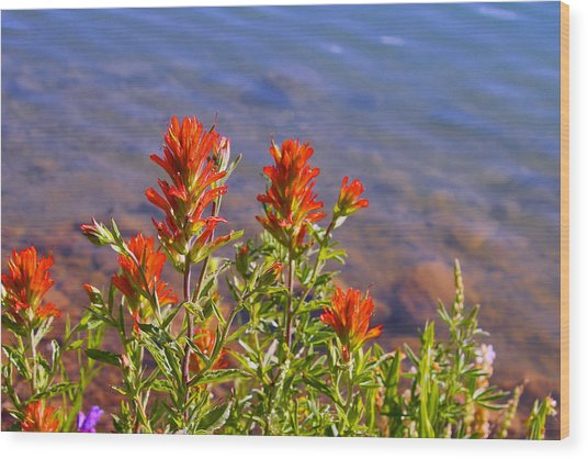 Paintbrush At Water's Edge Wood Print