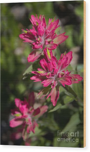 Wood Print featuring the photograph Paintbrush Trio by Katie LaSalle-Lowery