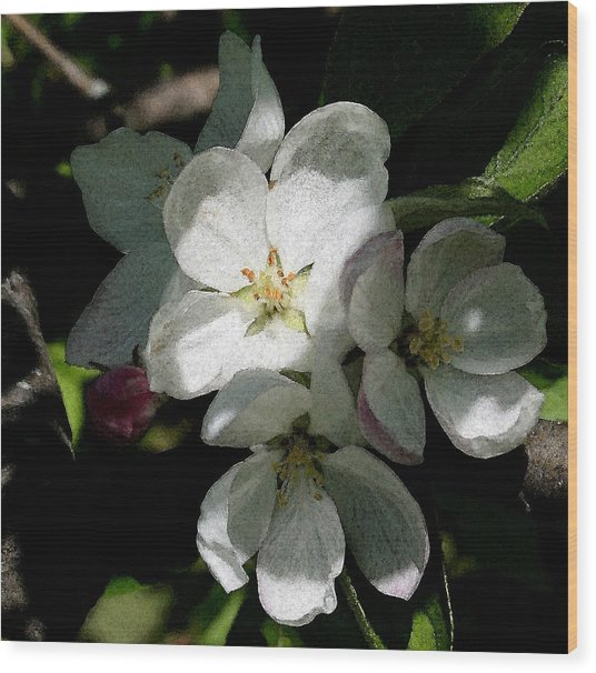 Painted Blossoms Wood Print