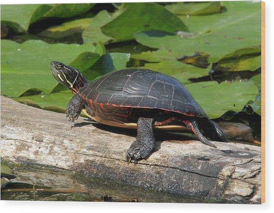 Painted Turtle On Log Wood Print
