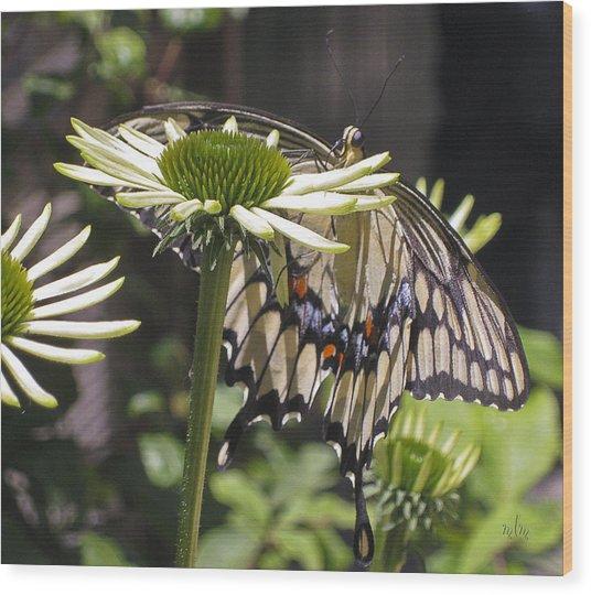 Pale Swallowtail Wood Print