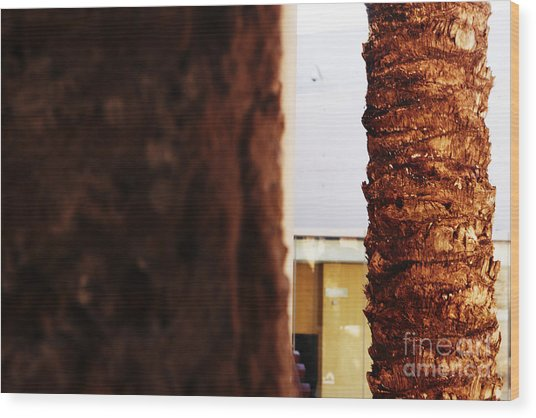 Palm And Wall Wood Print