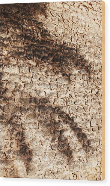 Palm Fragment Wood Print