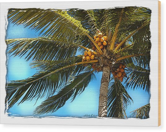 Palm Fronds Wood Print by Linda Olsen